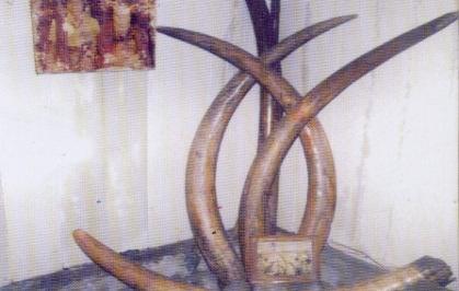 Tidak jauh dari Ledalero terdapat warisan situs kerajaan Nita yang berjarak 12 km dari Kota Maumere. Regalia Kerajaan Nita menunjukan bukti dan saksi sejarah Kerajaan Nita. Regalia tersebut diantaranya pakaian kebesaran kerajaan nita, terdapat juga gading gajah yang besar dan panjang, motif tenun ikat yang bagus serta upacara dan tarian tradisional.