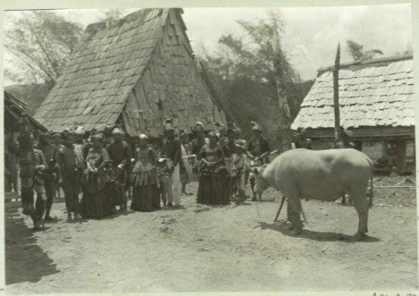 Mabogau, Ritual memohon hujan di kalangan suku Leboni. Setelah sebelumnya mereka menanam Padi dan dengan mengendara kufa mereka mempersembahkan kerbau kepada sang Dewata. Fotografer: Grubauer 1911.